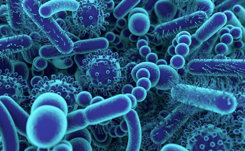 Mikroflora jelitowa kluczem do zdrowego ukłądu pokarmowego.
