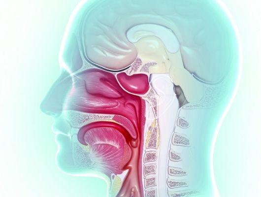 Nadwaga może wynikać z nieprawidłowego trawienia w jamie ustnej.