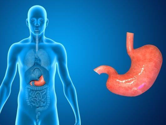 Żołądek wykonuje bardzo ważną pracę, to niezbędny czynnik walce z nadwagą.
