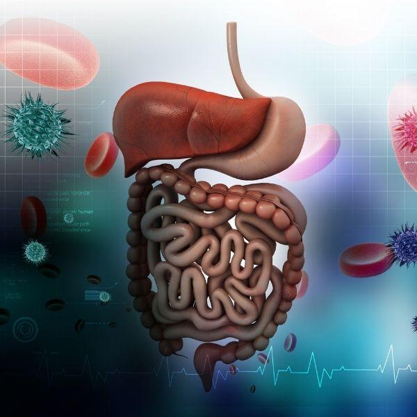 Nadwaga zaburza funkcjonowanie wszystkich organizmów.