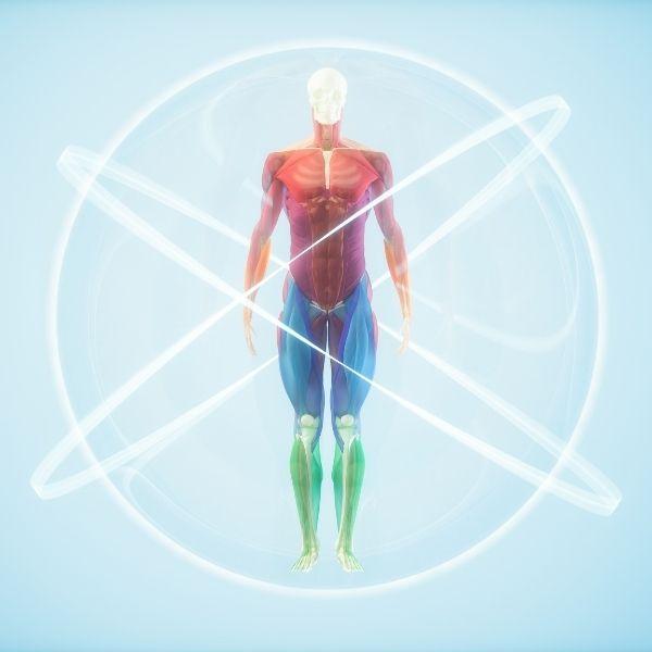 Pełna regeneracja organizmu.