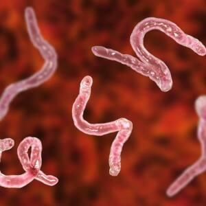 Odchudzanie pomaga pozbyć się pasożytów!