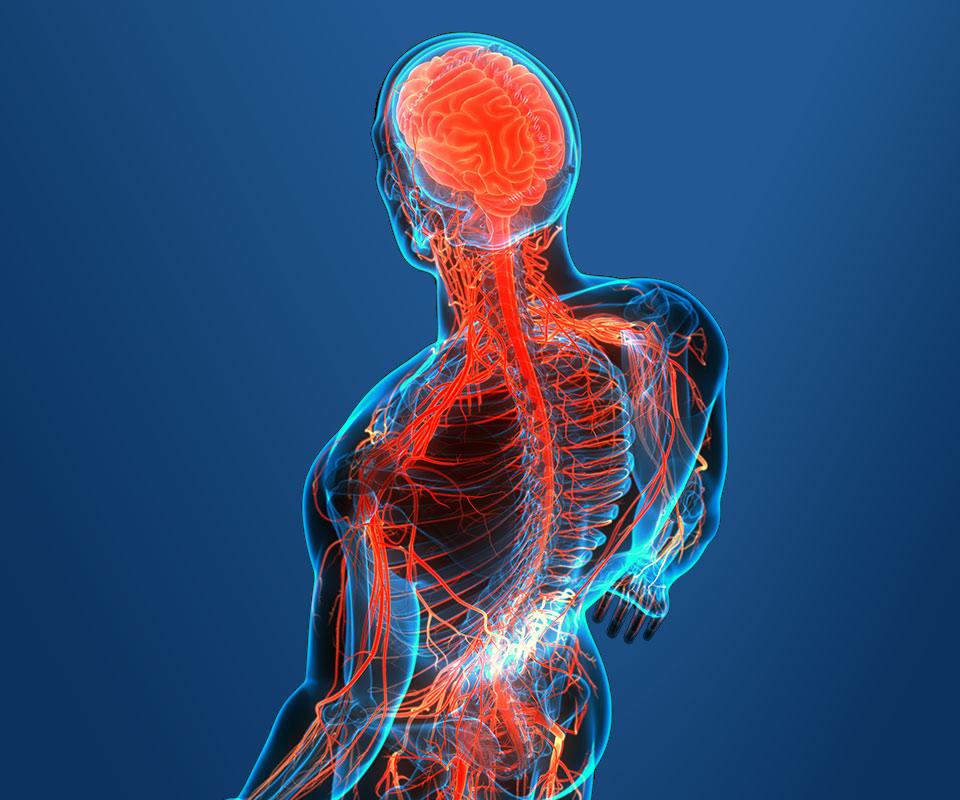 COVID-19 – Układ nerwowy