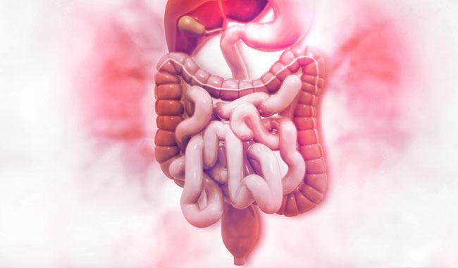 Leczenie zespołu jelita drażliwego IBS