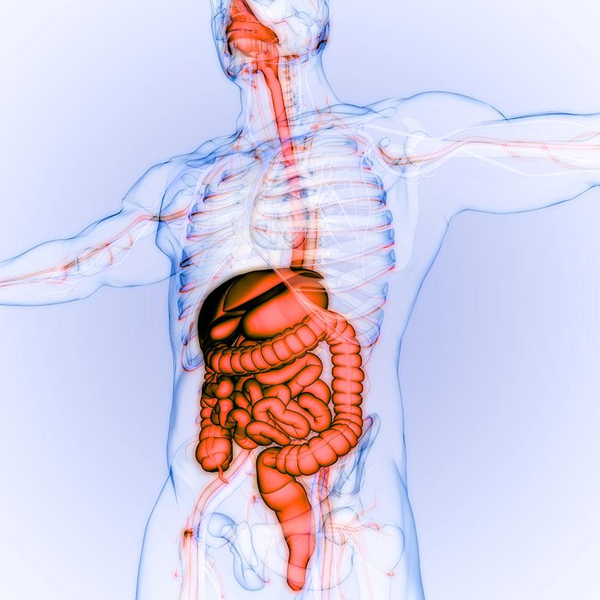 Jak się zaczynają choroby układu pokarmowego