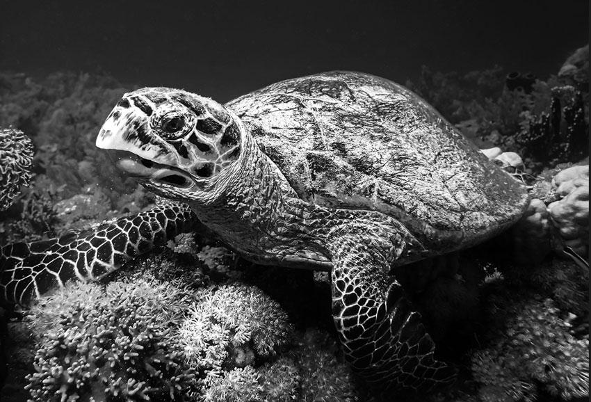 Długowieczność żółwia