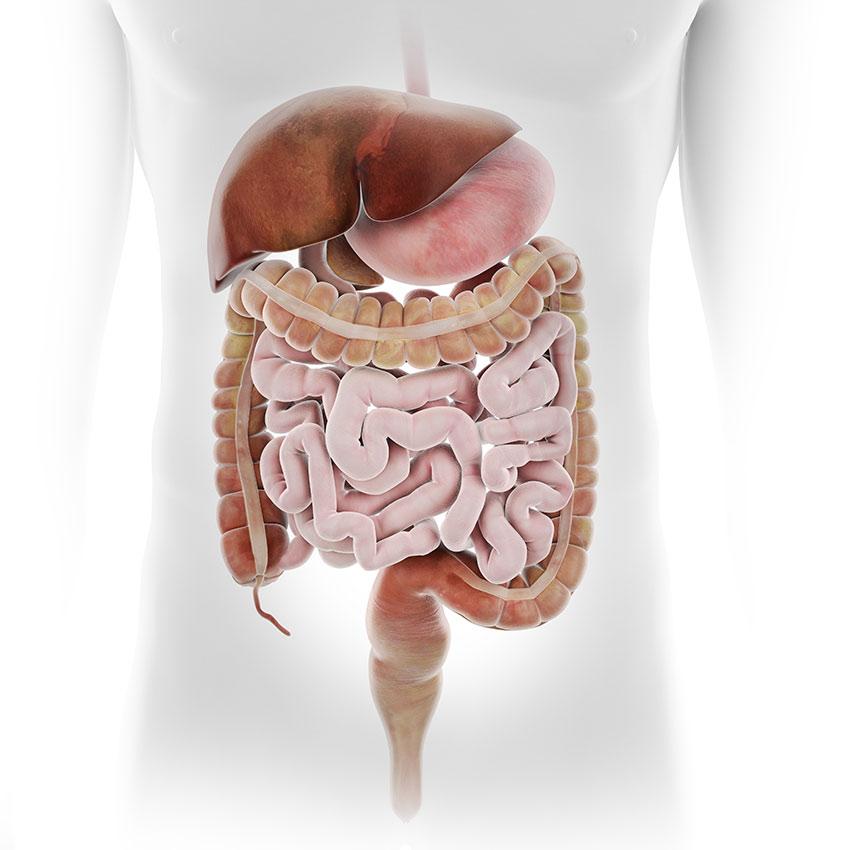 Leczeniu przewlekłych, nawrotowych chorób układu trawiennego